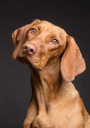 dicas de saúde para cachorros